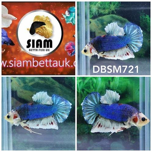 DBSM721 DUMBO HMPK MALE BETTA