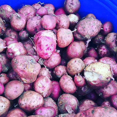 Red Potatoes by quart box
