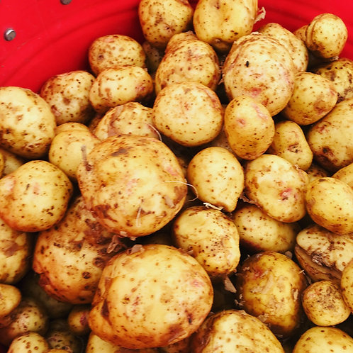 Yukon Gold Potatoes Quart Box