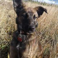 dog in field.jpg