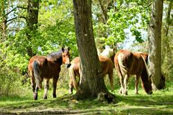 Découverte faune locale Sud Landes