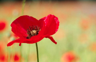 Remembrance Sunday - 11th November 2018