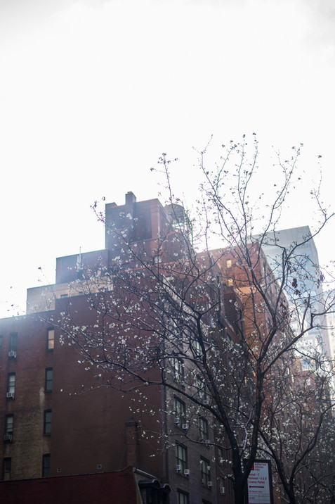 Felicity van Oort Fotografie | NEW YORK