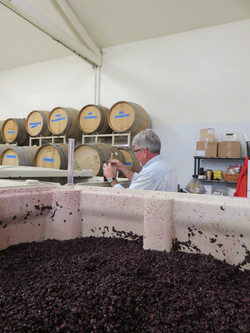 Formenting Pinot Noir