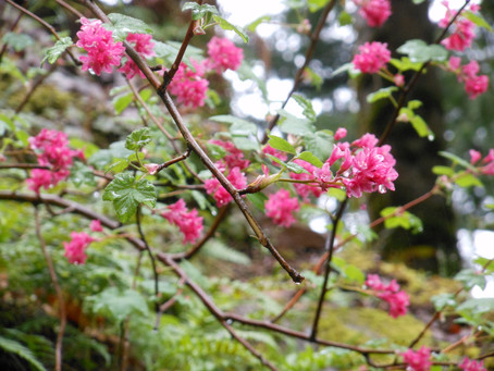 Spring In Oregon