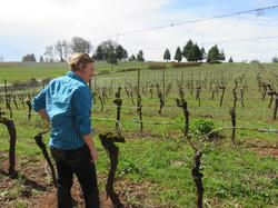 Vineyards before spring.