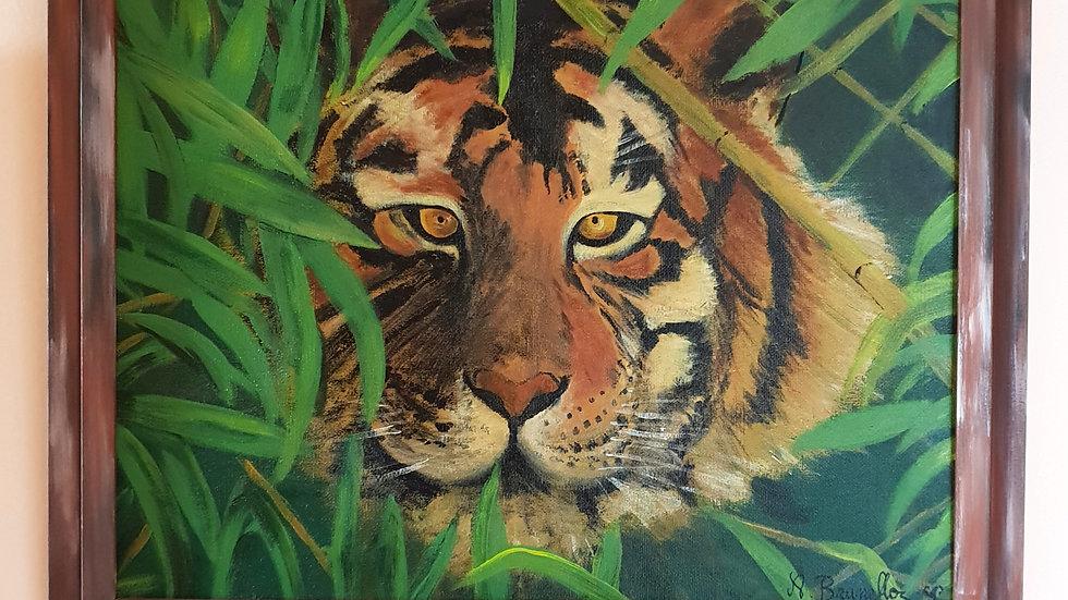 Tigre à l'affût