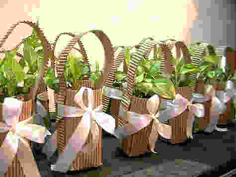 The images shows rows of saplings in degradable corrugated boxes.