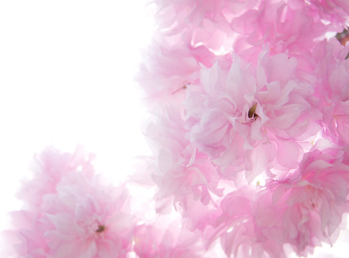 contact fleuri