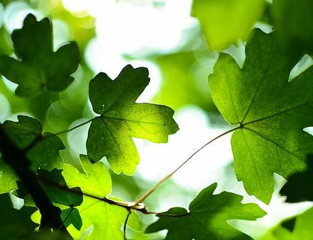 Végétation et arbres