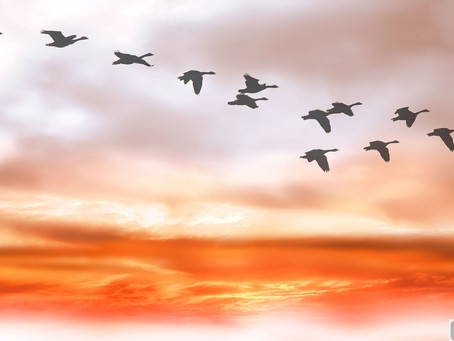 """""""Wild Geese,"""" by Rev. Anne Hines"""