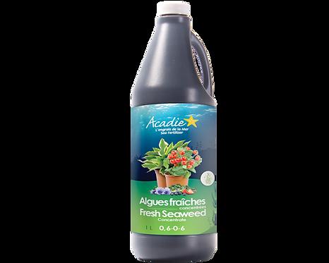 Acadie Algues fraîches concentrées (liquide) 1L