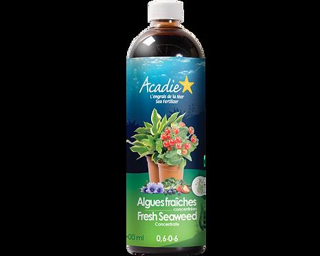 Acadie Algues fraîches concentrées (liquide) 500ml