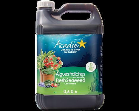 Acadie Algues fraîches concentrées (liquide) 4L
