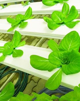 hydroponic-farm-153176158086c.jpg