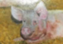 Varkentje in stro 40x30 cm.jpg