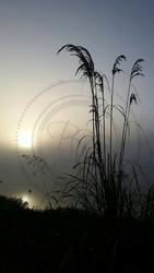 Fog16 - logo.jpg