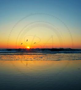 Morning Sun OBX - logo.jpg