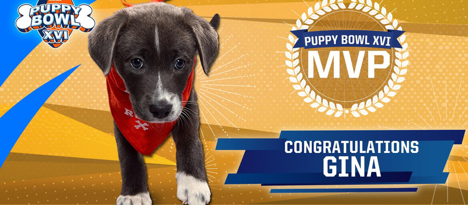 Puppy Bowl XVI, Part II: How did things shake out?