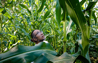 Nando & His Corn.jpg