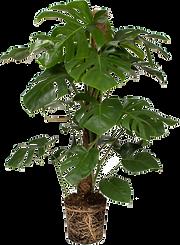 planta1.png