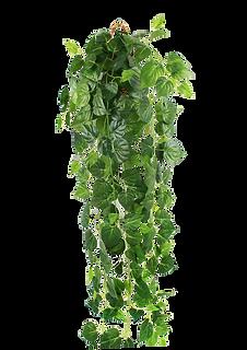 planta2.png