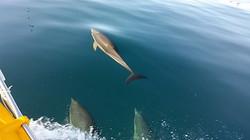 Delfines, Fuengirola, alquiler