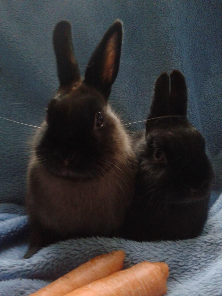 Cute Pair of Bunnies.jpg