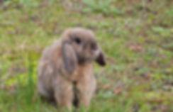 rabbit-1925677_1280.jpg