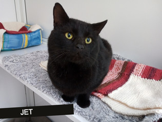 Jet is FIV, but what does that mean?