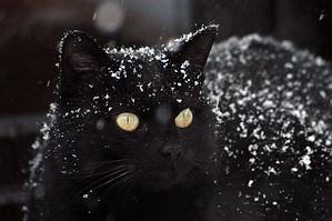 cat-1977416_1920.jpg