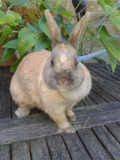 Rabbit Bletchley.jpg