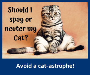 Should I spay or neuter my cat?
