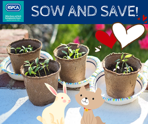 Sow and Save!