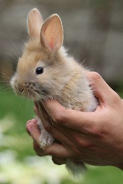 rabbit-2110689_1920.jpg