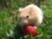 hamster-727293_1920.jpg