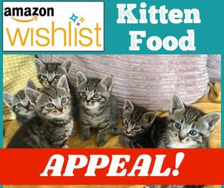 Kitten Food Appeal!