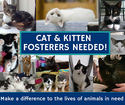 FosterersneedCATS.png