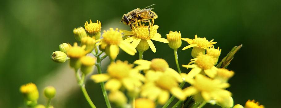 пчелни продукти форевър ливинг