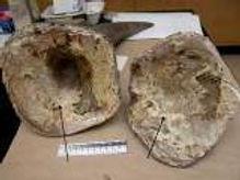Rhino Horn Solid Keratin