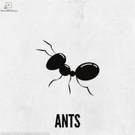 ANT Pest Control Kolkata.jpg