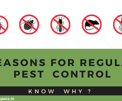 Were you aware of these reasons for regular pest control?
