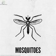 MOSQUITO Pest Control Kolkata.jpg