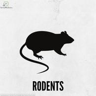 Rodent Pest Control Kolkata.jpg