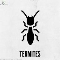 Termite Pest Control Kolkata.jpg
