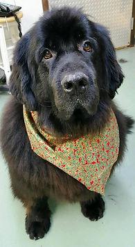 pet grooming, dog grooming, cat grooming, John Gagnon's Pet Resort, Pet Grooming Mat Removal