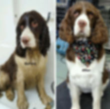 Dog Grooming Before and After Pictures