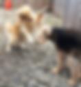 Dog Hotel, Dog Boarding, Doggie Hotel, Doggy Boarding, John Gagnon Pet Resort, Dog Daycare, Doggy Daycare