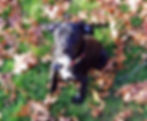 Pet Fencing, Invisible Fence, Invisible Pet Fence, PetSafe, Radio Fence, Underground Pet Fencing,Innotek, Smart Dog, Dog Watch, Pet Guardian, Dog Pet Fencing Collar, Dog Pet Fencing Collar Battery