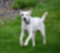 Dog Daycare, Doggy Daycare, Doggie Daycare, Cat and Dog Boarding, John Gagnon's Pet Resort